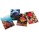 U.S. Toy 4489 Coral Reef Memo Pads