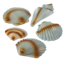 U.S. Toy HL187 Plastic Seashell Decorations / 5 Pcs