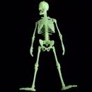 U.S. Toy MU75 Glow in the Dark Skeleton Box of Bones