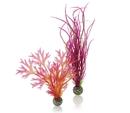 Biorb BO00294 Red / Pink Plant Pack
