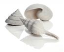 BO00666 BiOrb Sea Shells