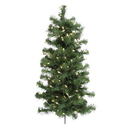 Vickerman A808893LED 3' x 21