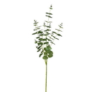 Vickerman FH190504 36