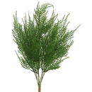Vickerman FK170001 19.5