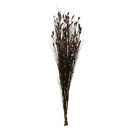 Vickerman H1BFL800 36-40
