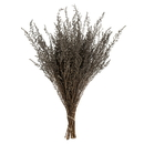 Vickerman H1STB300-2 14-18
