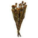 Vickerman H1TOF750-2 12-18