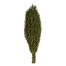 Vickerman H2OSP150 22 x 7