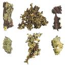 Vickerman H4MLI100 Box Basil Moss, Curly Lichen bulk
