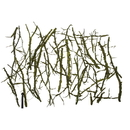 Vickerman H4WEB100 Basil Winged Elm Branches - Bulk