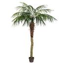 Vickerman TB180372 6' Potted Pheonix Palm Tree 545Lvs