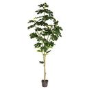 Vickerman TB180472 6' Potted Fig Tree 71Lvs