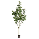 Vickerman TB180496 8' Potted Fig Tree 100Lvs