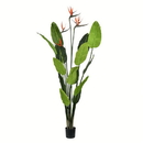 Vickerman TB191250 5' Potted Bird of Paradise Palm 14 Leave