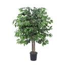 Vickerman Ficus Bush