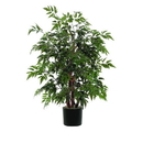 Vickerman TBU0640 4' Ming Aralia Bush