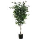 Vickerman TDX0160-07 6' Ficus Deluxe