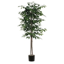 Vickerman TEC0160-07 6' Ficus tree