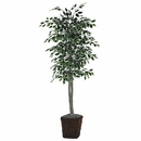 Vickerman TEC0260-0414 6' Varigated Ficus Tree in Square Willow