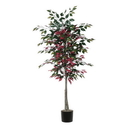 Vickerman TEC0360-07 6' Capensia tree