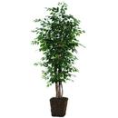Vickerman TEX0160-0414 6' Ficus Executive