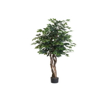 Vickerman TEX0160-07 6' Ficus Executive