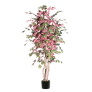 Vickerman TEX0360-07 6' Capensia Executive Tree