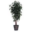 Vickerman TEX0760 6' Sakaki Executive
