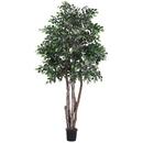 Vickerman TEX4260-07 6' Mini Ficus Executive