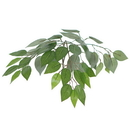 Vickerman THE0165-07 6.5' Ficus Heartland