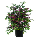 Vickerman TXX0340-06 4' Capensia Extra Full
