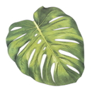 Weddingstar T156 Tropical Monstera Leaf Die-Cut Paper Placemat Sheets