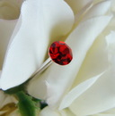 Elegance by Carbonneau BQ-Solataire-Sm Red Bouquet Crystal Jewelry Picks BQ-Solataire Red