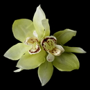 Elegance by Carbonneau Clip-400-Green Realistic Looking Bridal Orchid Flower Hair Clip - Clip 400 Mint Green