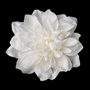 Elegance by Carbonneau Clip-402-Ivory Pearl Centered Bridal Hair Flower Clip or Clip Brooch 402 (White, Red, Ivory, Maroon)