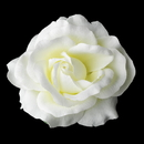 Elegance by Carbonneau Clip-403 Classic Medium Diamond White Rose on Alligator Hair Clip 403