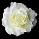 Elegance by Carbonneau Clip-416-Diamond-White Classic Ravish Diamond White Rose Flower Hair Clip - Clip 416