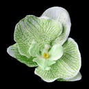 Elegance by Carbonneau Clip-9945-Green Green Orchid Hair Flower Clip 9945